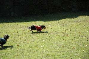 cuddludogrun.jpg
