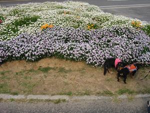 flower2hiki.jpg