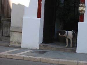 rondadog.jpg